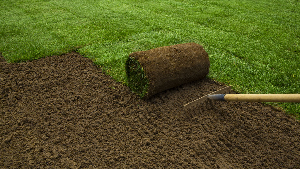 10 Reasons Why You Should Install Fresh Sod