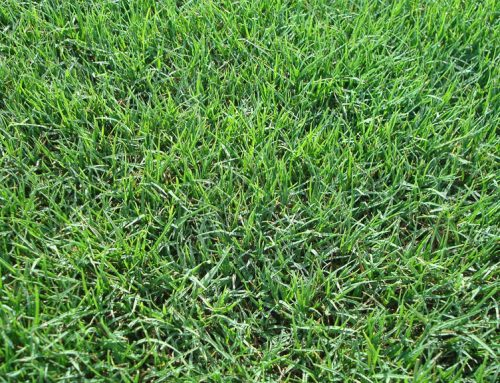 How to Care for Your Lawn in Florida during Winter Months