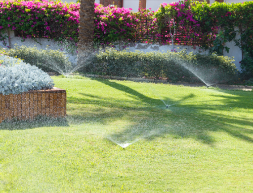 When is The Best Time to Water Your Lawn in Florida?