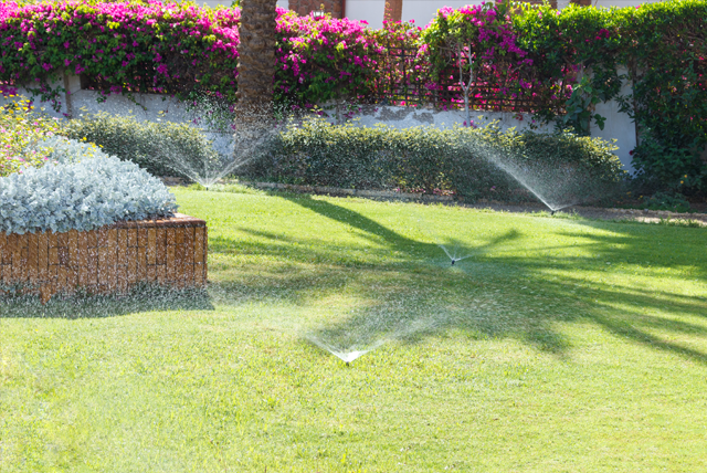 When is The Best Time to Water Your Lawn in Florida