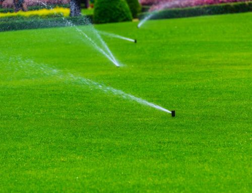 Top 5 Benefits of Installing an Irrigation System