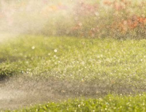 Best Advice for Watering your Lawn during Summer